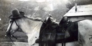 JC Tracys Horse in CO 1932